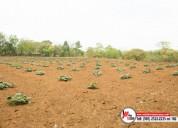 Se vende finca en masaya