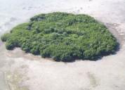 Venta isla privada los cayos de la florida