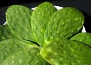 Exportamos chile, nopal, cilantro y otros.