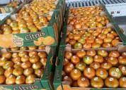 Fruta  fresca calidad