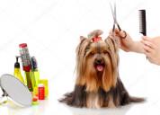 Stylists or groomers / estilistas o groomers
